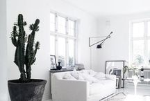 cactus use in decor