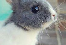 söpöt kanit