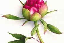 Botanical subjects