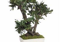 Les Bonsaïs Stabilisés / Découvrez les bonsaïs stabilisés que propose Nature-Stabilisée. La magie des plantes stabilisées réside dans le fait que ce sont des plantes naturelles et qu'elles ne nécessitent aucun entretien. Plus d'infos sur notre site internet