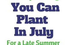July plant