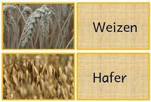 Vom Korn zum Brot