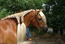 hästar flätor mm