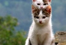Cute Cats ~Kitty~