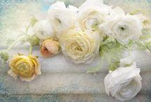 Blommor  -Flowers