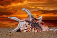 Seashells / Let me find you at the beach. / by Carol Myers
