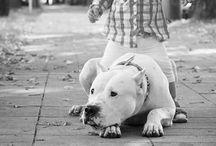 Animals that I love / animals