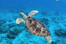 Okinawa - Japan Tropical Side / Informazioni utili per visitare le Isole di Okinawa e godersi il viaggio al meglio