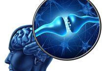 Neuroscience / How does the brain work?