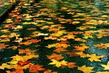 Fall is busting out all over / by Rachel Kreisberg