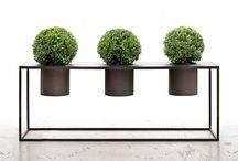 Planter - inne og ute
