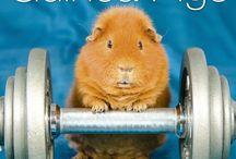 2015 Guinea Pigs Calendar