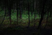 Valoa metsässä