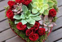 Valentine's Day 2015 / Valentine's Day Flowers