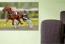 Horses in Art- Harness Racing / Training scenes, headshots