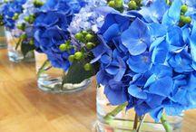 Colour scheme - blue