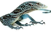 Reptiles du salon Animal Expo