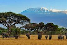 Afrika / Altijd al de big5 willen spotten? Of misschien een gave 4x4 trip maken door de woeste natuur van Afrika? Wat je ook zoekt, je vindt het op Vakantieboulevard.nl, verrassend andere reizen