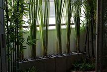 Garden plant stuff