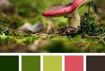 Colors cabinet