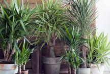 Kunstplanten en bloemen / Bloemen en planten die altijd mooi blijven! Voor ieder seizoen en in ieder interieur. Bij ons kunt u ook kunstplanten en bloemen huren en kunnen we deze ieder seizoen voor u wisselen.