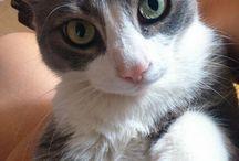 Pollycat / My cat Polly