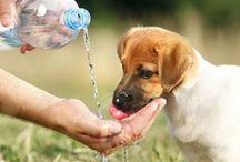 Dog Talk Blog Posts