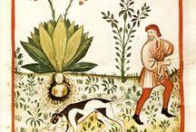 BOOKS - Tacuina sanitatis (XIV secolo) - Theatrum sanitatis / Sotto questo nome vengono classificati tutti quei manuali di scienza medica scritti e miniati soprattutto in Italia settentrionale (con qualche eccezione in Spagna e nell'area fiorentina), dalla seconda metà del XIV secolo al 1450 circa, che descrivevano, sotto forma di brevi precetti, le proprietà mediche di ortaggi, alberi da frutta, spezie e cibi, ma anche stagioni, eventi naturali, moti dell'animo, riportandone i loro effetti sul corpo umano ed il modo di correggerli o favorirli.