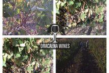 Wine Making / Grape Sourcing, wine making ideas