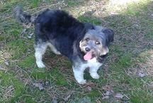 Adopcje / O psach, które znalazły dom