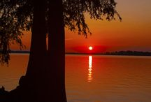 Reelfoot Lake / Travel / by Donna Williams