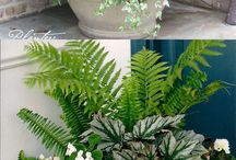Outdoor pot arrangements