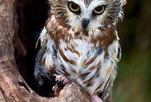 всё  живое / фото  и  рисунки  птиц   и  животных