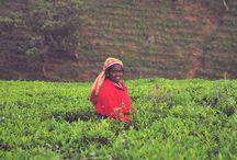 Indie/Srilanka/Nepal / My photos