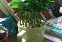 plantad