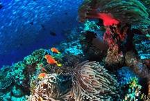 Natural Reefs