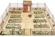 Vegetable and Fruit Gardens / gardening, vegetable gardens, vegetables, fruit, fruit gardens, gardens, homestead gardening, sustainable gardening, no till, organic garden, backyard gardens
