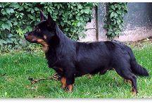 ons hondje