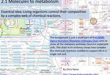 Molecular biology ib