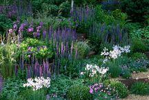 Fioletowy w ogrodzie