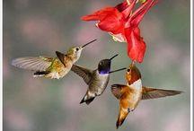Beleza , natureza , plantas e pássaros