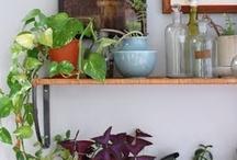 Pflanzen für die Wohnung