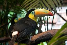 Costa Rica Travel Inspiration / Discover the best of Costa Rica in Central America with Veloso Tours.