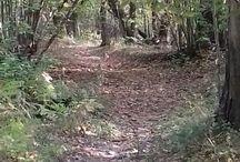 bosco / wood