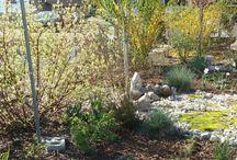 zahrada 2015