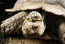 I ❤  turtles!