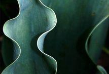 Botanic / botanical inspired design botanic inspirations