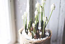 Kukkia; Kevät