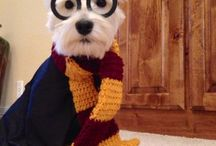 Harry Potter Halloween Costumes for Pets / Harry Potter Halloween Costumes for Pets