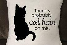 Cat related stuff